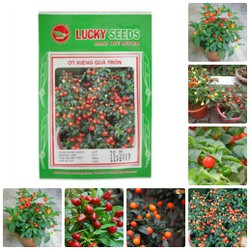 Hạt giống ớt kiểng quả tròn đỏ gói 30 hạt
