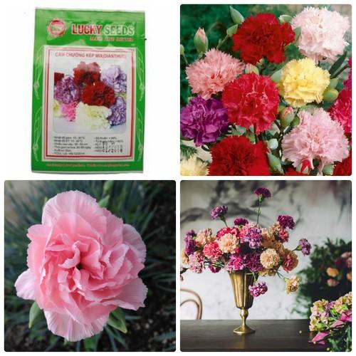 Hạt giống hoa cẩm chướng kép mix nhiều màu LUCKY SEEDS - 10453129 , 7235749 , 15_7235749 , 28000 , Hat-giong-hoa-cam-chuong-kep-mix-nhieu-mau-LUCKY-SEEDS-15_7235749 , sendo.vn , Hạt giống hoa cẩm chướng kép mix nhiều màu LUCKY SEEDS