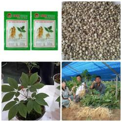 BỘ 10 gói hạt giống nhân sâm Hàn Quốc tặng kèm 2 phân bón