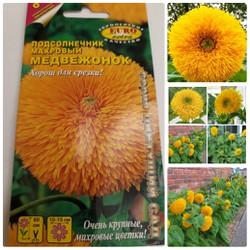 Hạt giống hoa hướng dương bông xù dễ trồng
