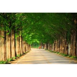 Du lịch Hàn Quốc: Seoul - Jeju - Everland - Nami - Tết Dương Lịch