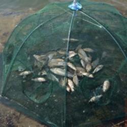 Lưới bắt cá bát quái hot nhất thị trường