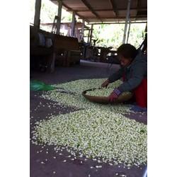 Mình chuyen cung cấp hoa Lài tươi ướp trà Hoa Lài cúng số lượng lớn