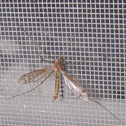 Lưới Chống Muỗi Và Côn Trùng Cho Cửa