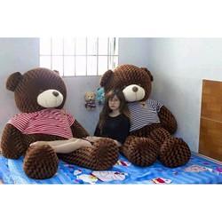 Gấu bông teddy siêu bự siêu rẻ màu socola