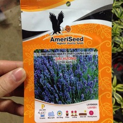 Hạt giống Hoa Oải Hương Lavender