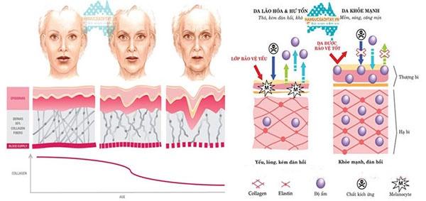 Viên uống bổ sung collagen dành cho người trên 45 tuổi Collamax 45+ 2