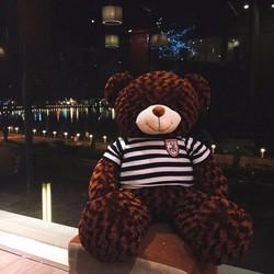 Gấu bông Teddy nhiều màu - Gấu Teddy socola khổ 1m