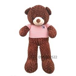 Gấu Teddy 1m6 - Lông xoắn- Gòn Trắng - Choco