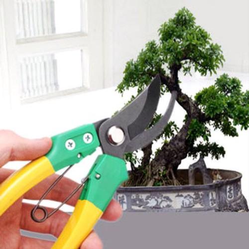 Kéo cắt tỉa cây cảnh cao cấp tiện dụng - 4176522 , 5034587 , 15_5034587 , 79000 , Keo-cat-tia-cay-canh-cao-cap-tien-dung-15_5034587 , sendo.vn , Kéo cắt tỉa cây cảnh cao cấp tiện dụng