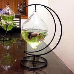 bể cá mini cung trăng giọt nước