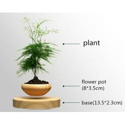 Chậu bonsai air quà tặng độc đáo