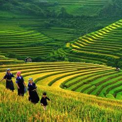 Tour Hà Nội  Sapa  Cát Cát  Hàm Rồng  KS 3 cùng Go Asia Travel 2N1Đ