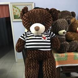 Gấu bông teddy lông xoắn hoa hồng khổ 1m6
