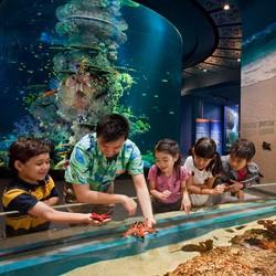 Vé thủy cung Singapore trẻ em chính hãng, bảo hành 6 tháng