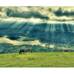 Tour Chinh phục đỉnh Lang Biang  Thung lũng Vàng 01 ngày