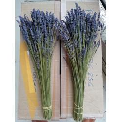 Hoa khô Lavender 1 bó 400-450 cành