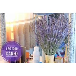 Hoa oải hương khô, lavender khô 300 cành
