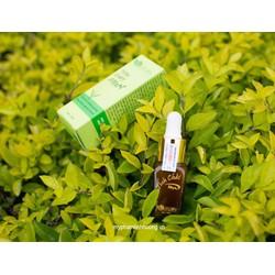 tinh dầu trị mụn triết xuất chè xanh mỹ phẩm linh hương