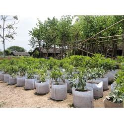Bộ 50 túi trồng cây 0 quai, Φ25 x h25