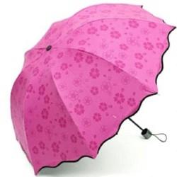 ô dù nở hoa khi đi mưa