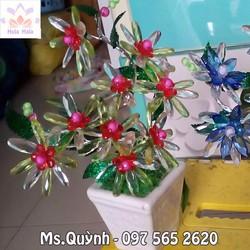 Hoa pha lê - Hứng nắng - Hoa thược dược