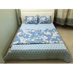 drap giường- cotton
