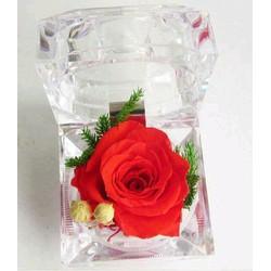 Hoa hồng bất tử thay lời yêu thương