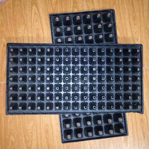 Bộ 5 khay nhựa ươm cây 105 lỗ, vỉ ươm hạt giống, khay nhựa pvc ươm hạt rau hoa - 16903699 , 6643726 , 15_6643726 , 60000 , Bo-5-khay-nhua-uom-cay-105-lo-vi-uom-hat-giong-khay-nhua-pvc-uom-hat-rau-hoa-15_6643726 , sendo.vn , Bộ 5 khay nhựa ươm cây 105 lỗ, vỉ ươm hạt giống, khay nhựa pvc ươm hạt rau hoa