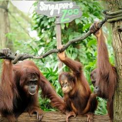 Vườn Thú Ngày Zoo NGƯỜI LỚN - Gồm cả vé xe điện Tram