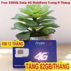 Sim 4G Mobifone Tặng 558Gb Tốc Độ Cực Cao Trong 9 Tháng