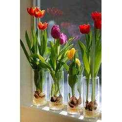 bình căm hoa thủy tinh 12cm x cao 30 cm