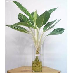 bình thủy tinh cắm hoa trang trí 10cm x 30cm