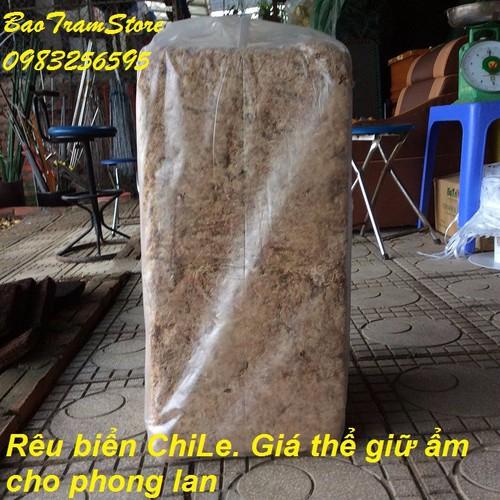 Rêu trắng ChiLe - Giá thể giữ ẩm tuyệt vời cho phong lan, kiện 4,8kg