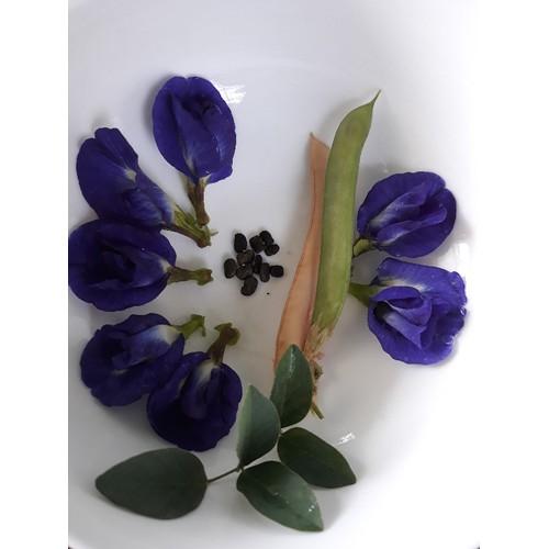 Hạt giống hoa đậu biếc gói 40 hạt - 11163648 , 12200080 , 15_12200080 , 25000 , Hat-giong-hoa-dau-biec-goi-40-hat-15_12200080 , sendo.vn , Hạt giống hoa đậu biếc gói 40 hạt