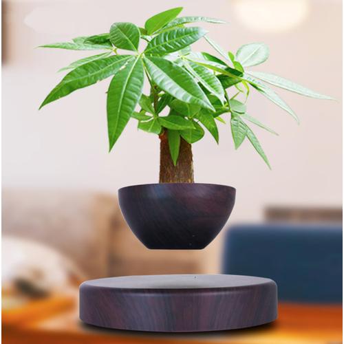Cây bonsai bay lơ lửng vân gỗ đen độc đáo - best seller tony