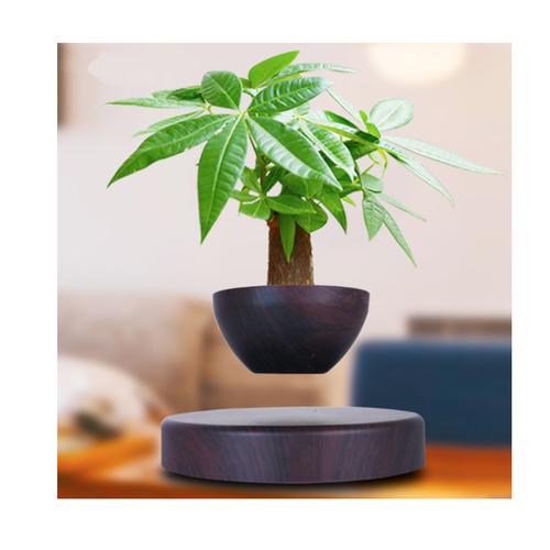 Cây  cảnh bonsai trang trí lơ lửng giữa không trung 2019