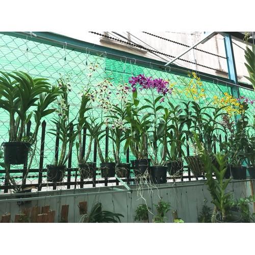 Lưới che nắng Thái lan hiệu Anet xanh khổ 2m