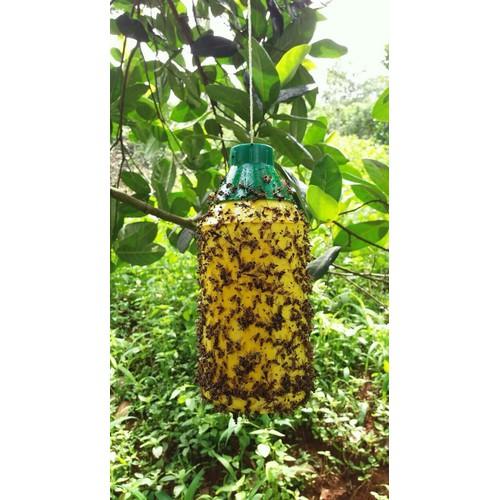Keo xịt bẫy ruồi vàng đục quả 450ml- giảm giá sinh nhật Sendo