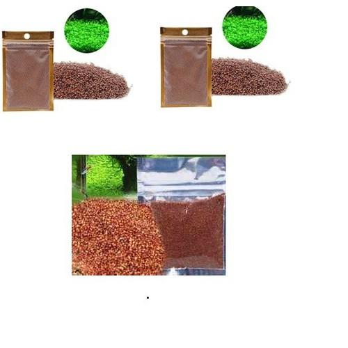 1 gói Hạt giống cây thủy sinh cây trân châu thủy sinh - 5625900 , 12053454 , 15_12053454 , 60000 , 1-goi-Hat-giong-cay-thuy-sinh-cay-tran-chau-thuy-sinh-15_12053454 , sendo.vn , 1 gói Hạt giống cây thủy sinh cây trân châu thủy sinh
