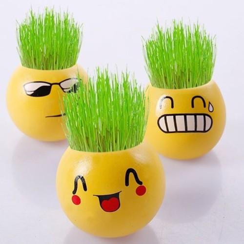 Bộ 3 chậu trồng cây mini tặng kèm mùn kích mầm và hạt giống - 5837154 , 12335024 , 15_12335024 , 60000 , Bo-3-chau-trong-cay-mini-tang-kem-mun-kich-mam-va-hat-giong-15_12335024 , sendo.vn , Bộ 3 chậu trồng cây mini tặng kèm mùn kích mầm và hạt giống
