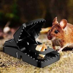 Bẫy Chuột kiểu mới