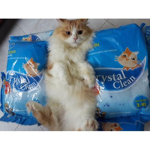 Cát vệ sinh thủy tinh cho mèo