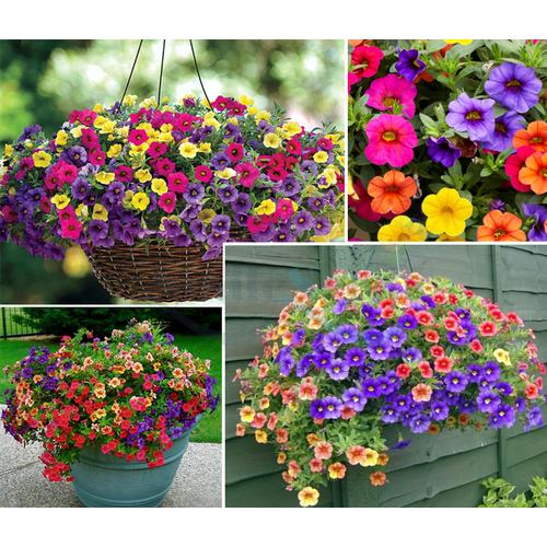 hạt giống hoa triệu chuông mix màu - 5654942 , 12089289 , 15_12089289 , 18000 , hat-giong-hoa-trieu-chuong-mix-mau-15_12089289 , sendo.vn , hạt giống hoa triệu chuông mix màu
