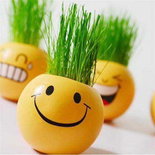 Combo 4 bộ chậu trồng cây mini - chậu trồng cây cảm xúc có hạt giống