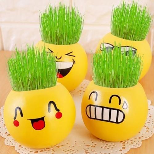 Combo 5 bộ chậu trồng cây mini - chậu trồng cây cảm xúc có hạt giống - 7239875 , 13929257 , 15_13929257 , 150000 , Combo-5-bo-chau-trong-cay-mini-chau-trong-cay-cam-xuc-co-hat-giong-15_13929257 , sendo.vn , Combo 5 bộ chậu trồng cây mini - chậu trồng cây cảm xúc có hạt giống
