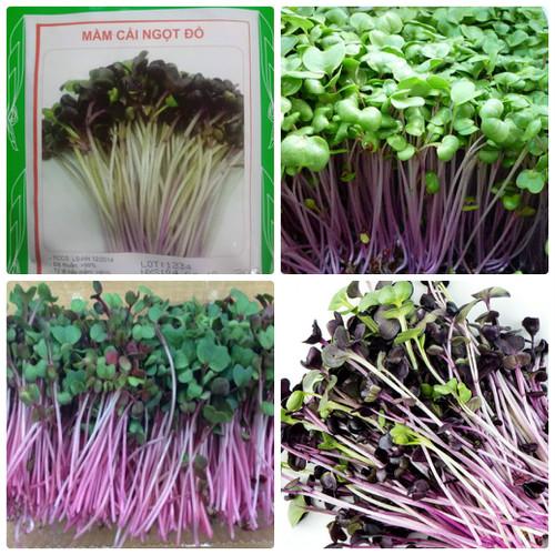 Hạt giống rau mầm cải ngọt đỏ - 20gr