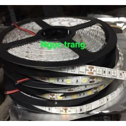 Dây LED 5050_12V - 5M -  Chống nước
