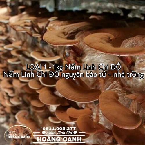Nấm Linh Chi 1kg