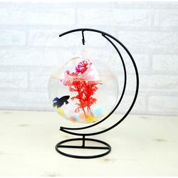 Bể cá mini Cung Trăng - Tặng kèm tiểu cảnh + Phụ kiện